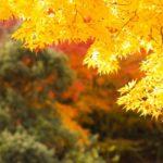 定光寺・定光寺公園の紅葉2014の見ごろ&見どころはコレ!