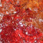 小國神社の紅葉2014の見ごろは?絶景スポット&散策コースも