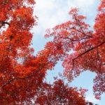 奈良県立竜田公園の紅葉2014の見ごろ&おすすめ散策コース!