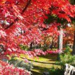京都嵐山の紅葉2014の見ごろは?おすすめ散策コースはコレ!