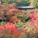 京都東福寺の紅葉2014の見ごろは?絶景おすすめ散策コースも