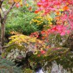 箱根の紅葉狩り2014の見ごろは?ゴールデンルートはコレ!