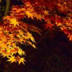 鎌倉・長谷寺の紅葉2014を攻略!裏大仏ハイキングコースとは?