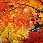 高源寺の紅葉2014の見頃は?丹波紅葉三山で大人な紅葉狩り!