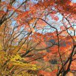 高尾山の紅葉2014の歩き方!ミシュラン三ツ星観光地を攻略!