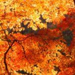 世屋高原で紅葉と海の絶景を堪能!お楽しみ紅葉狩りルートも