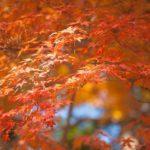 川越の紅葉2014で秋を満喫!見ごろ見所から散策コースまで!