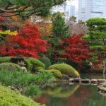 新宿御苑の紅葉2014の楽しみ方!見ごろや散策コースは?