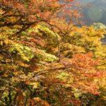 秋川渓谷の紅葉2014の見頃は?散策コースにグルメ&温泉も!