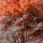 真庭・普門寺の紅葉2014の見頃は?四季桜とのコラボは必見!