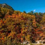 茶臼山高原の紅葉2014の見頃は?リゾートエリアで紅葉狩り!