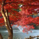 岡崎東公園の紅葉の見頃は?ライトアップ&周辺名所案内も!